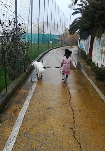 pastore svizzero bianco Lungoresina, pastore svizzero bianco allevamenti in Umbria, , pastore svizzero bianco bambini